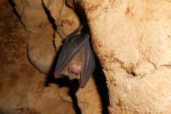 grotta-tanella-pai-torri-del-benaco-0007