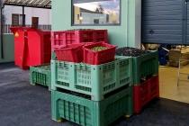 molitura-olive-produzione-olio-extravergine-lagodigarda-02