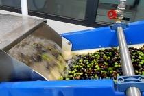 molitura-olive-produzione-olio-extravergine-lagodigarda-07