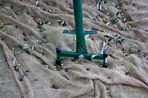 raccolta-olive-lagodigarda-04
