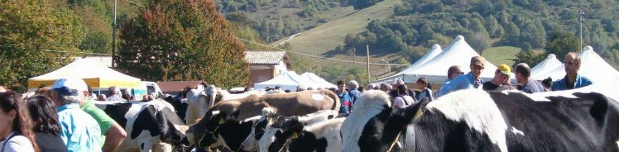 San Michele Festival